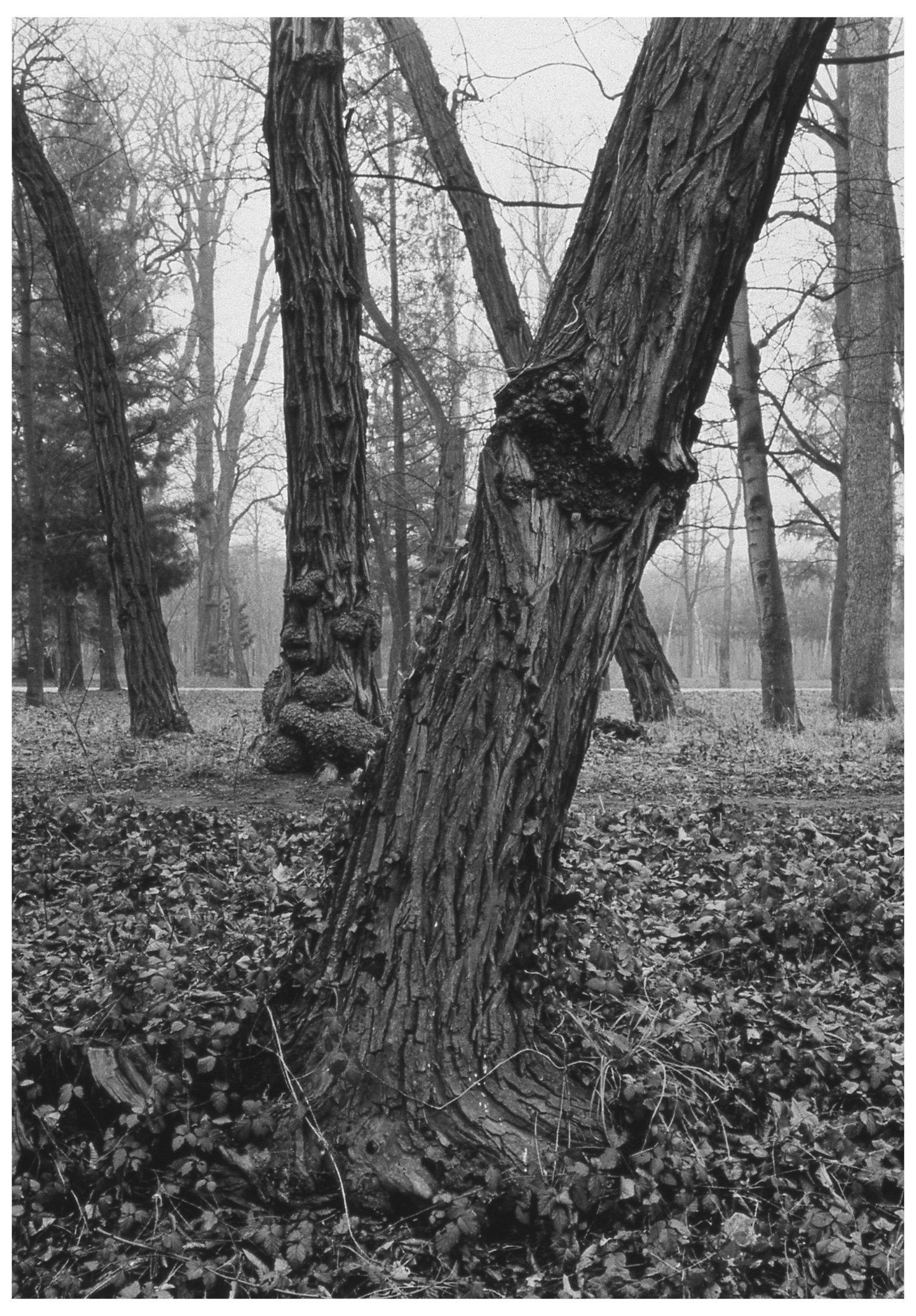 Trees  04.jpg