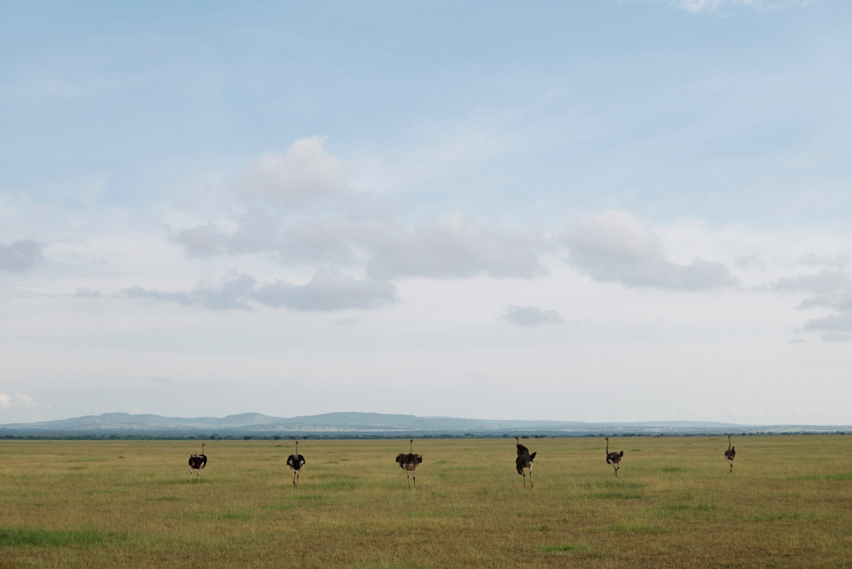 2016_BM_BA_Tanzania-2706.jpg