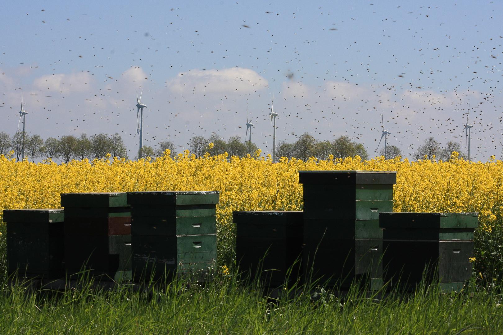 Beehive and rape