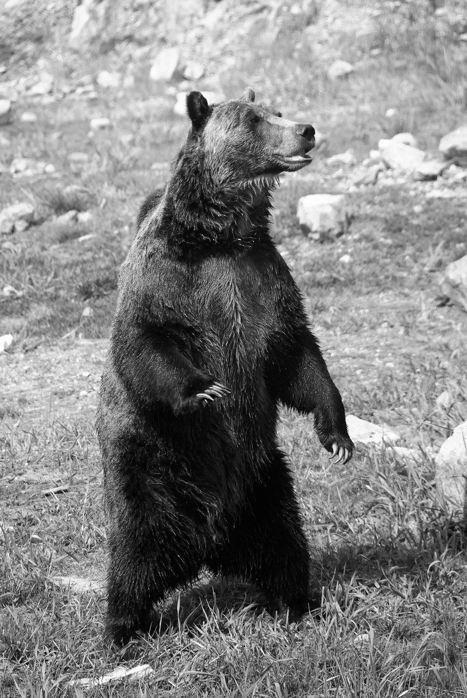 Bear8.jpg