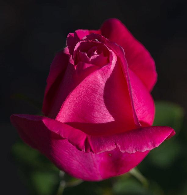 Rosebub_DSC8249-1-as-Smart-Object-1.jpg