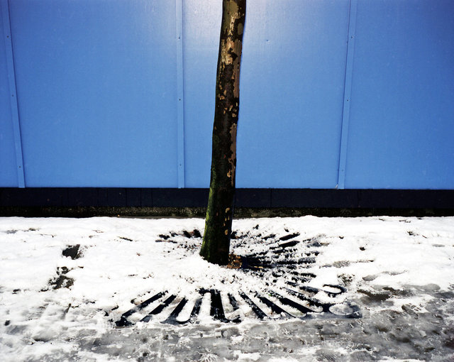 D:blue,snow & tree.jpg