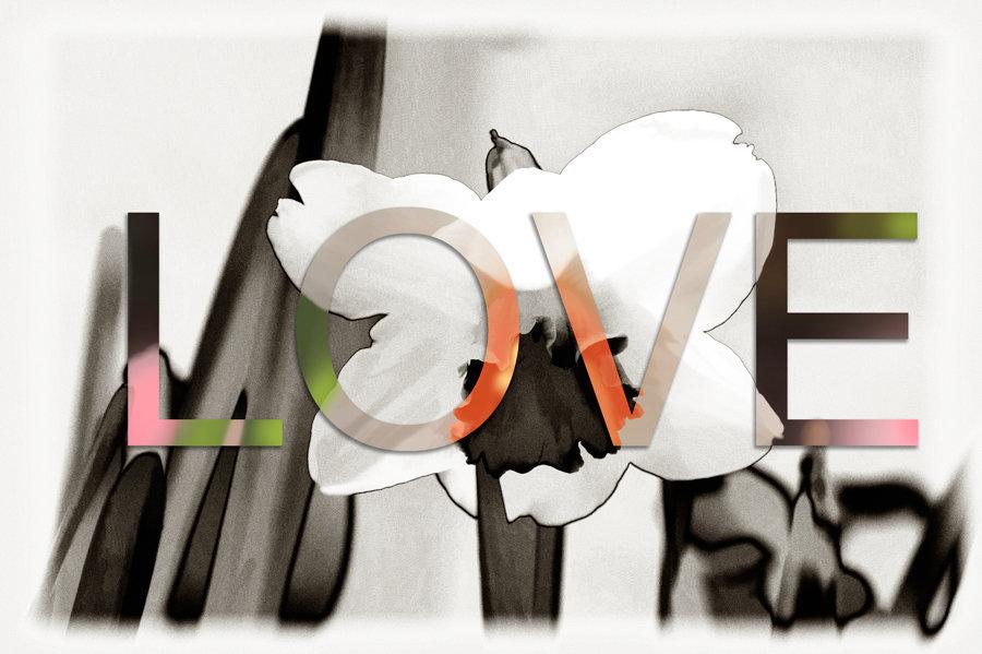 love-daffodil.jpg
