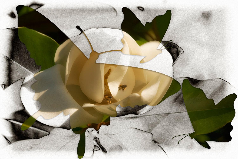 butterfly-0385.jpg