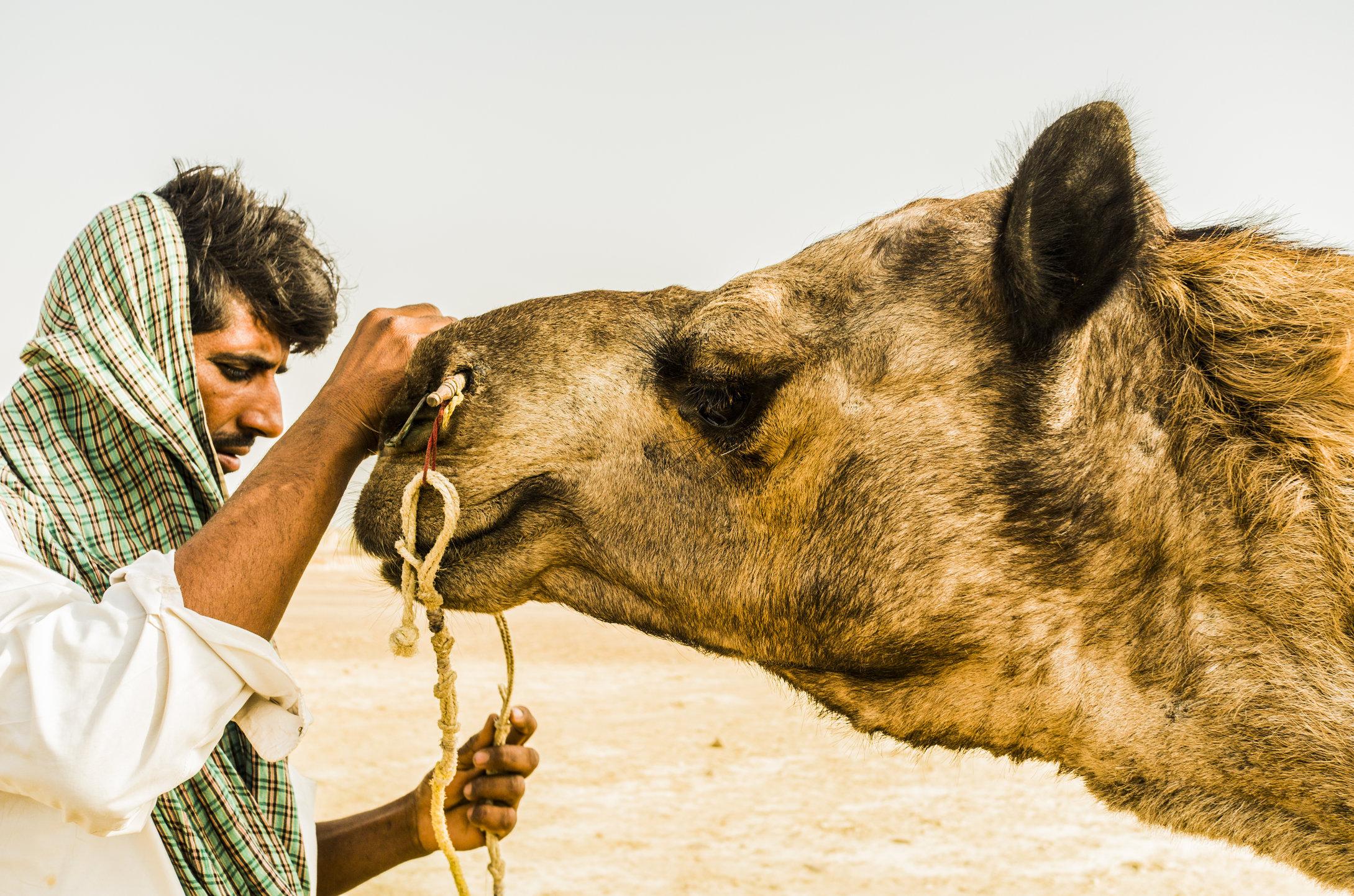 Jaisalmer, India. 2015.