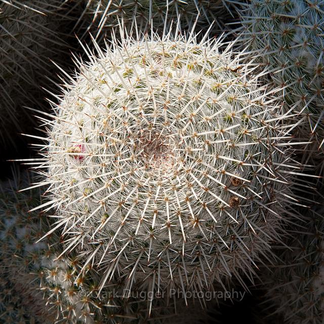 Succulent-1089-Edit_8x8.jpg