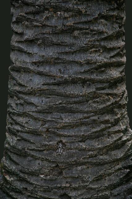 palm grey