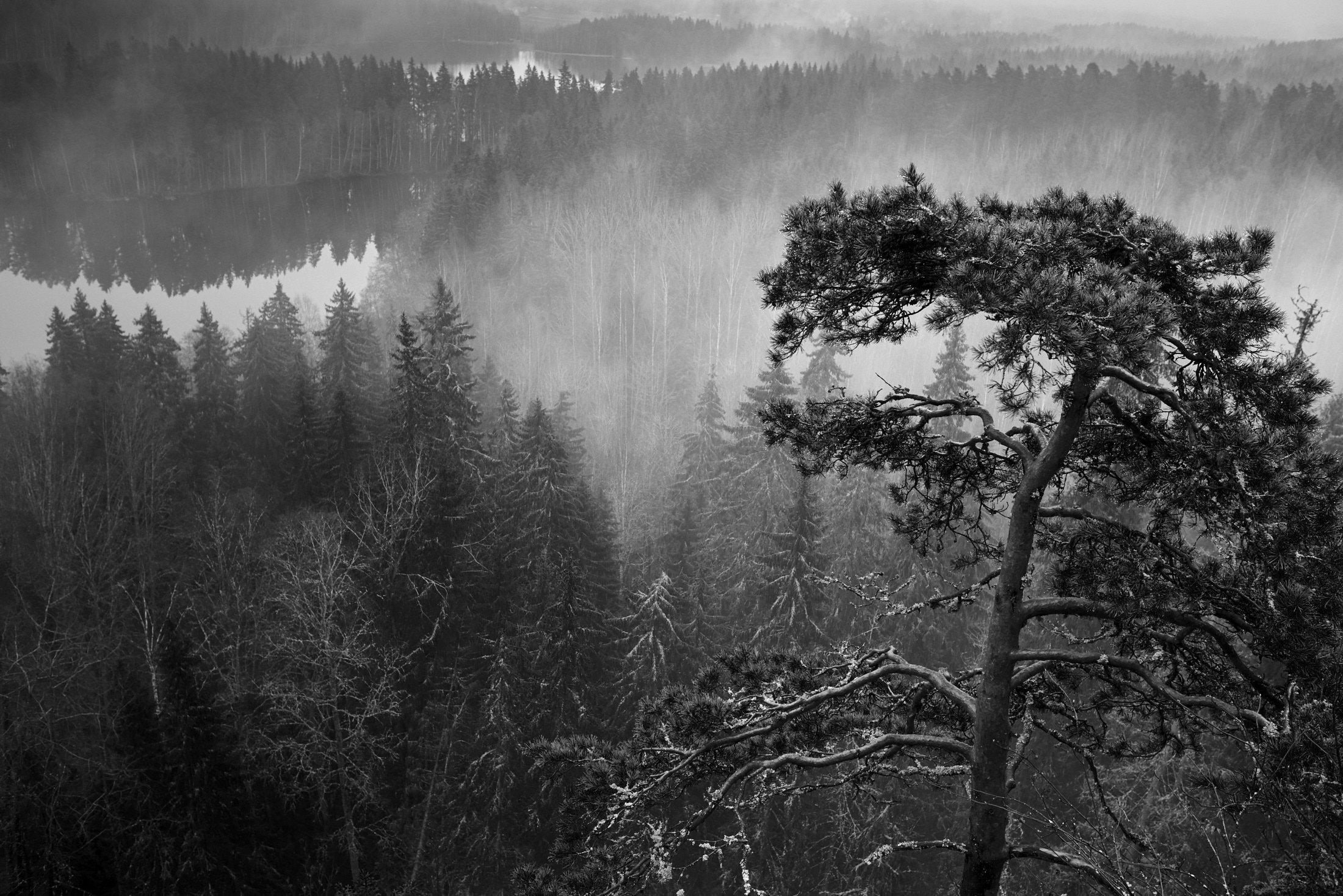 Fog - Aulanko