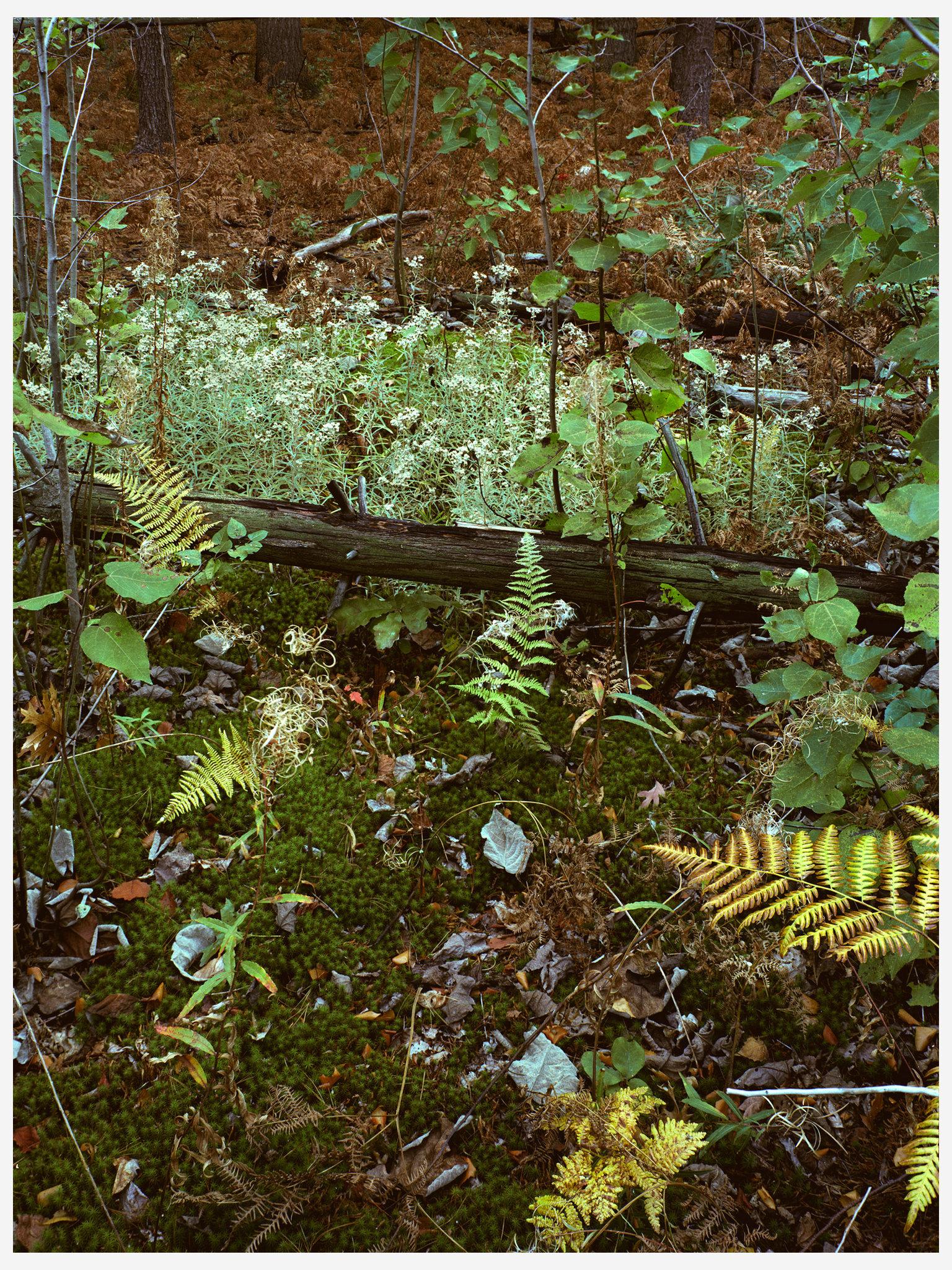 Landscapes Color Medford Elf.jpg