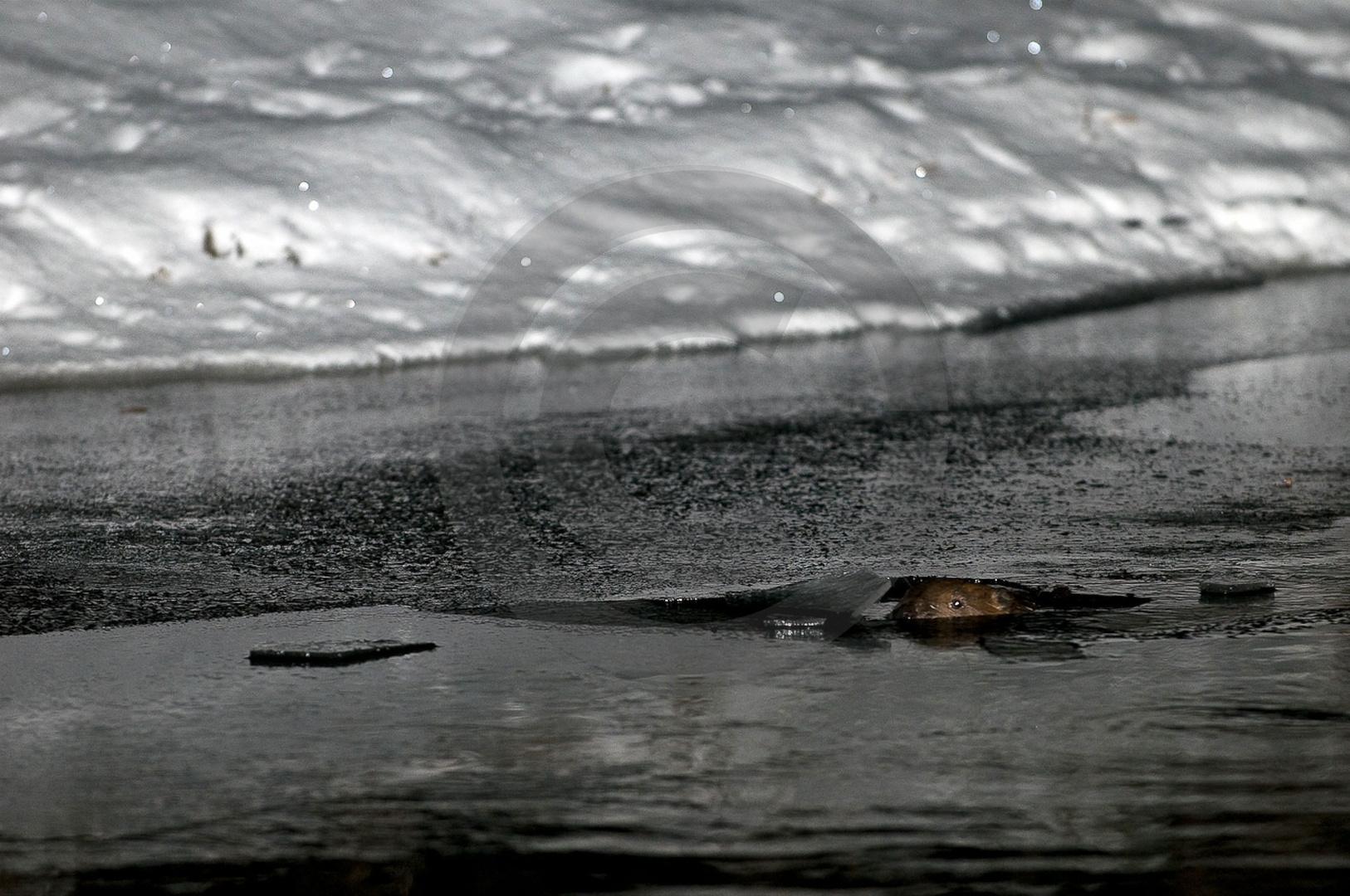 Tiere-Biber-31.jpg