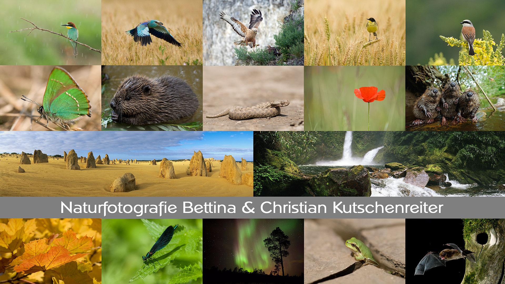 Kutschenreiter Naturfotografie Biber Zwergerl Insekten Pflanzen Säugetiere Vögel Makro Panorama Schmuck Mokume Gane