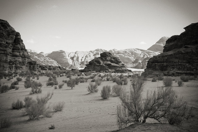Quintessential Desert
