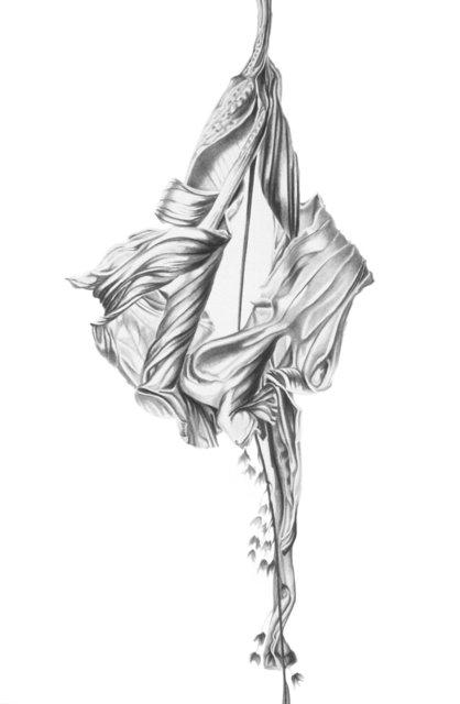 Hibiscus Lyrical