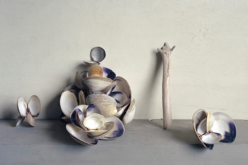 Clam Shells, c 2007