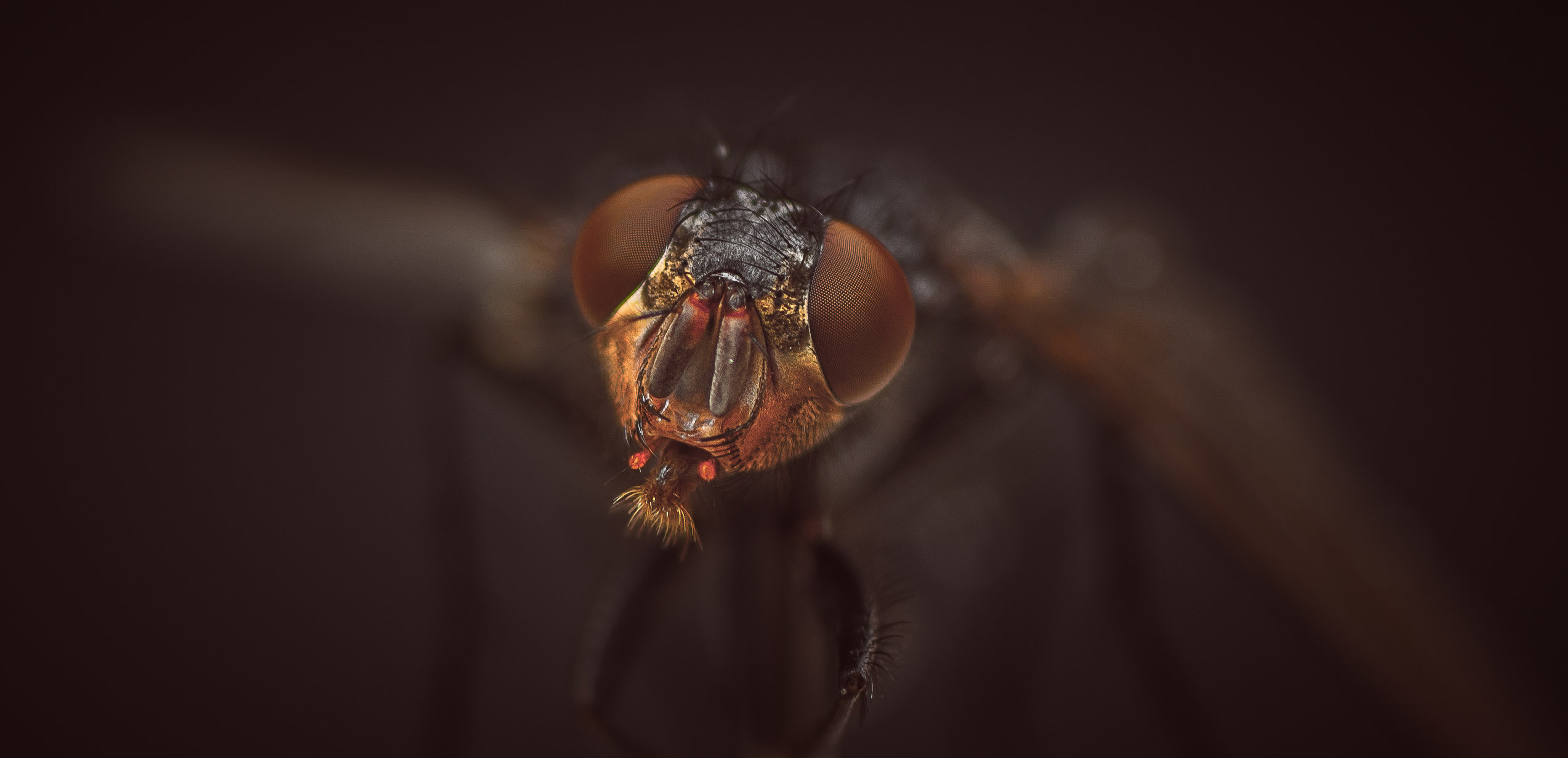 A Close Encounter With A Fly