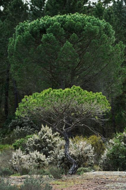 Plaine des Maures, Provence