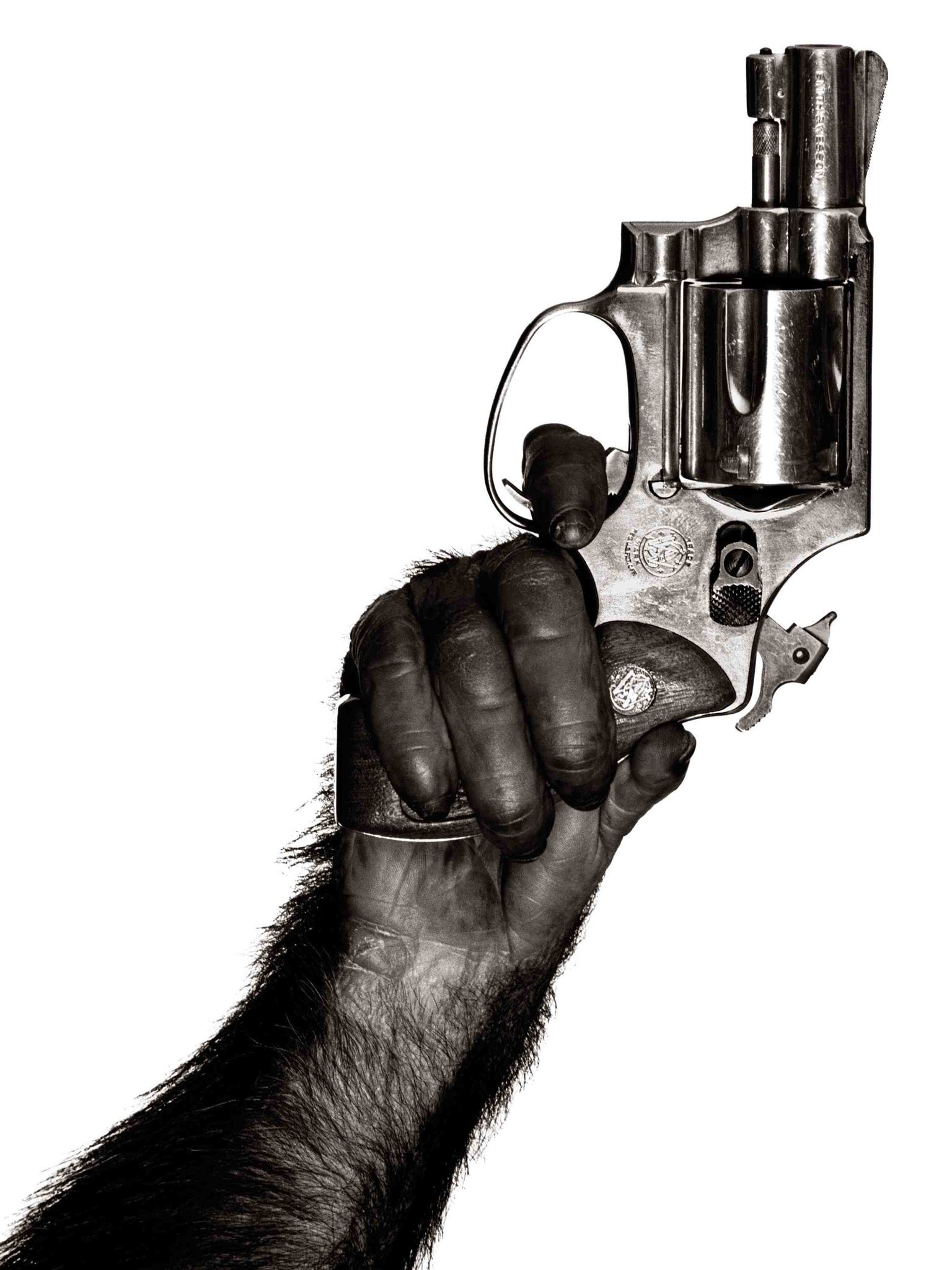 Monkey with Gun © Albert Watson