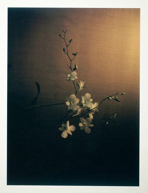 #9 Orchidee