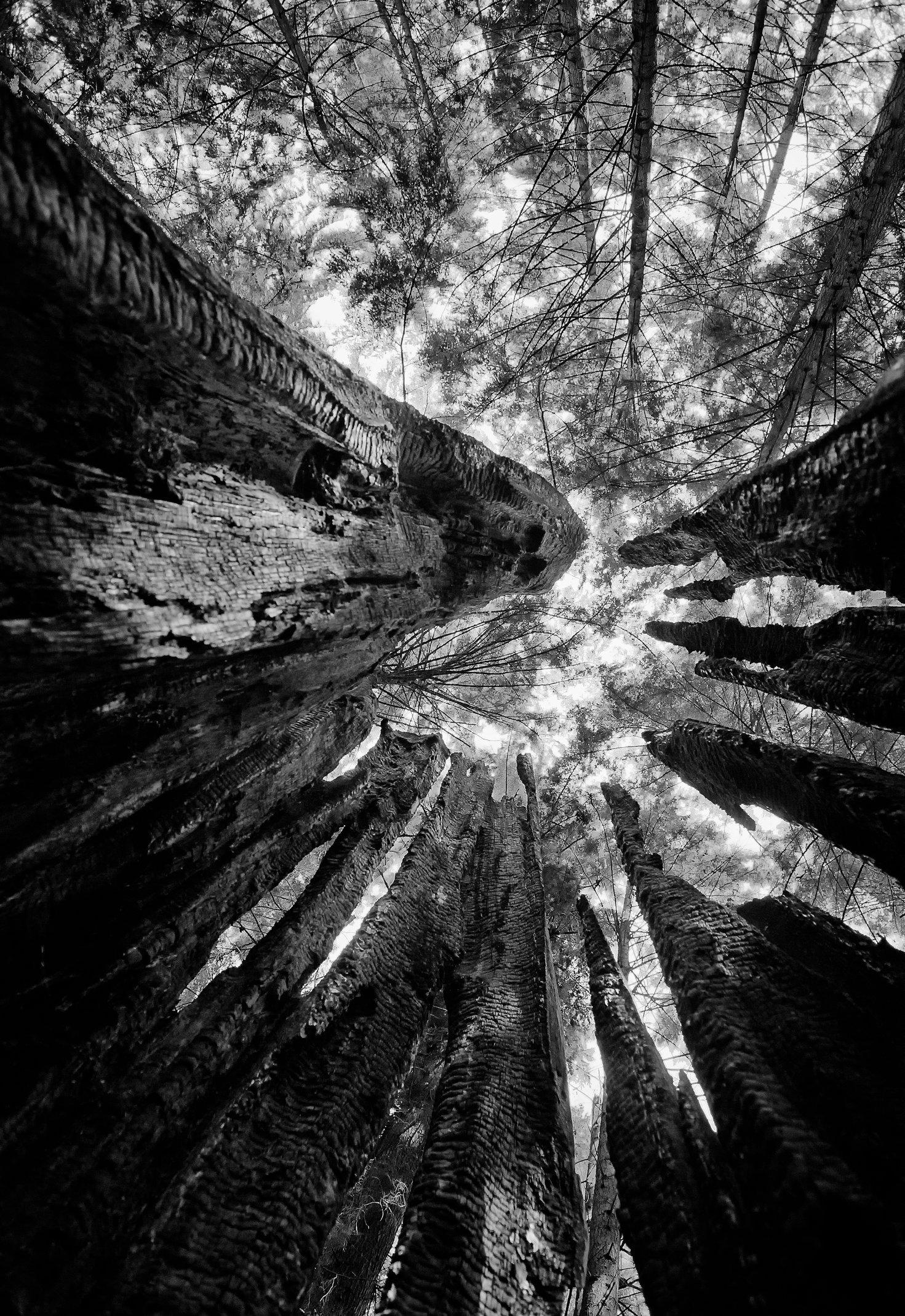 Tree-bw82-11x16.jpg