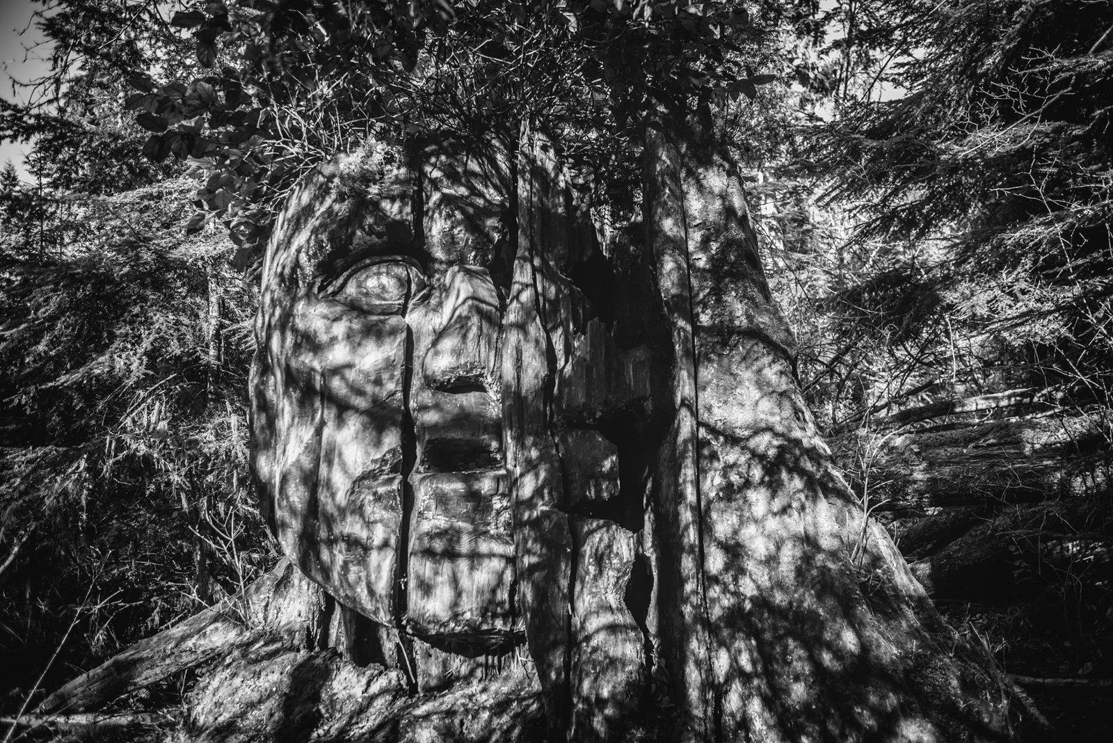 Sacret Tree.jpg
