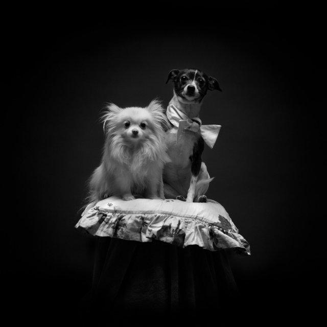 Buttercup & Feline