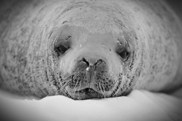 SEA LION CLOSE UP.jpg