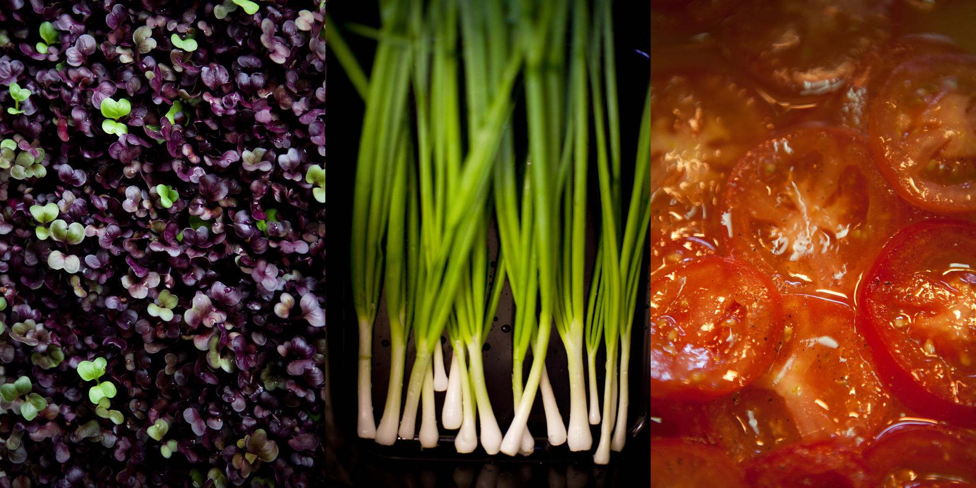 foodtrio2.jpg