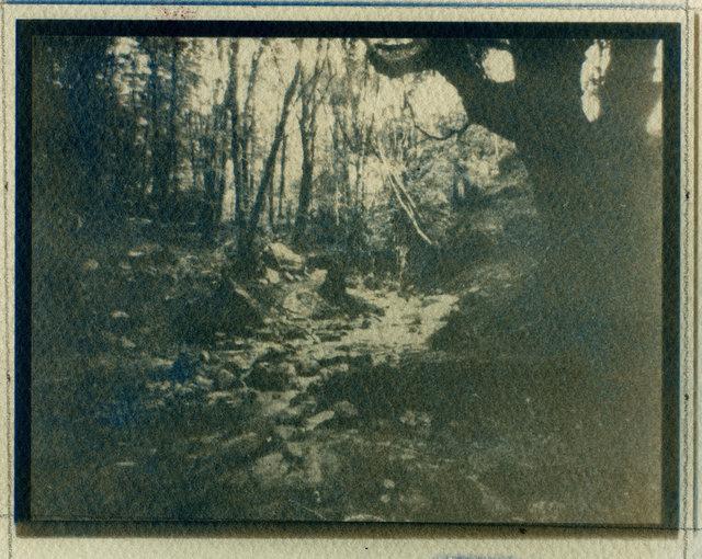 Kinlochmore Forest