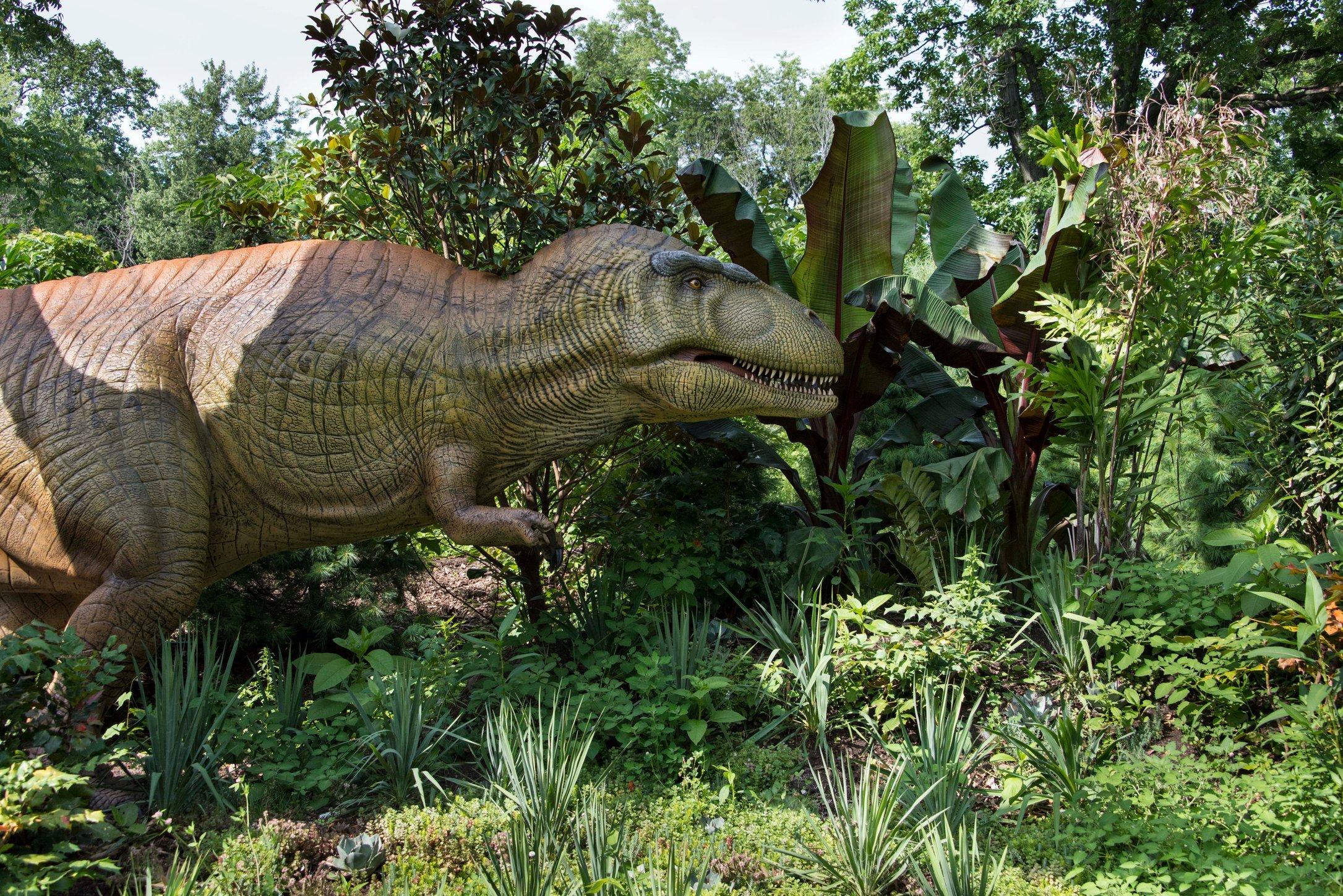 Dino 27.jpg