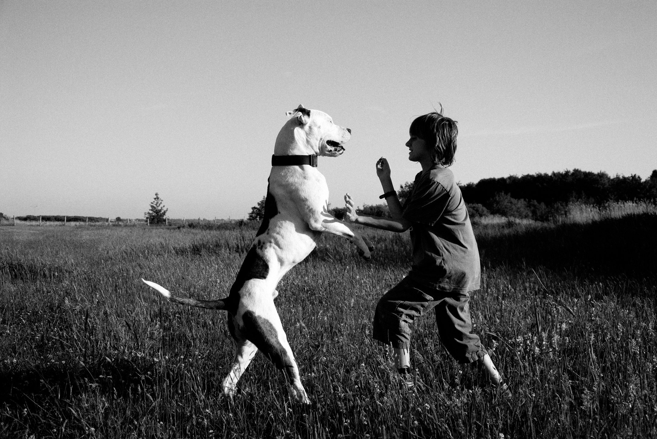 vechthonden (3).jpg