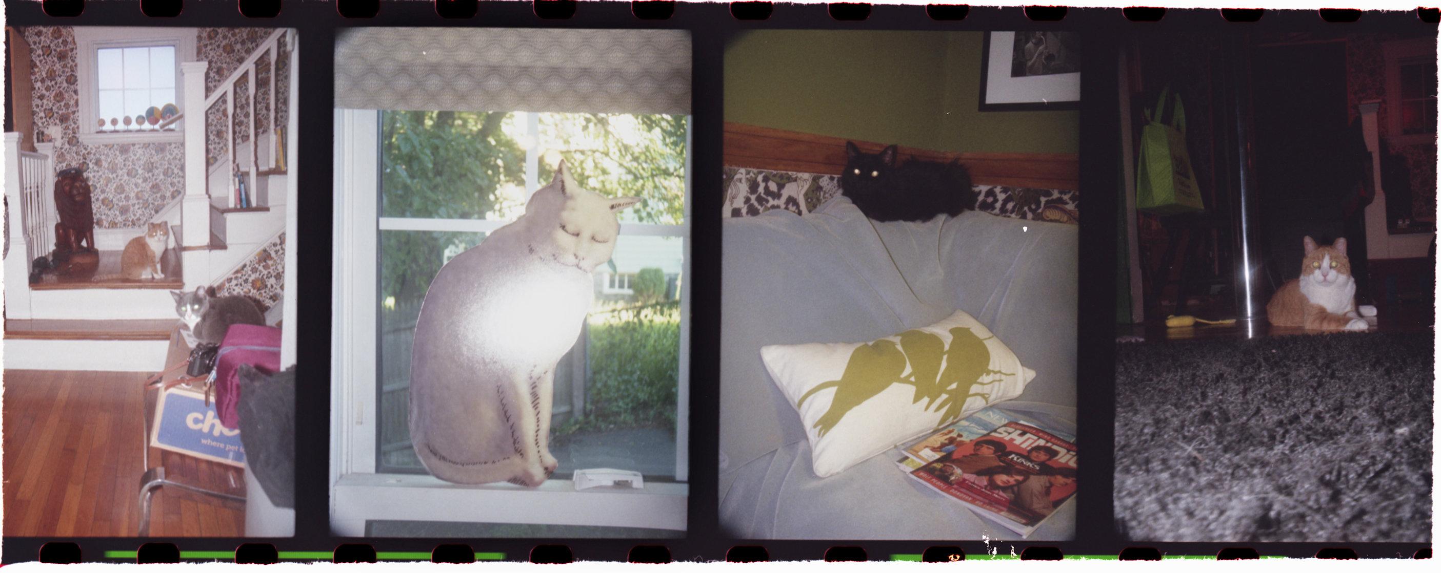 11catsFLATSHARP.jpg