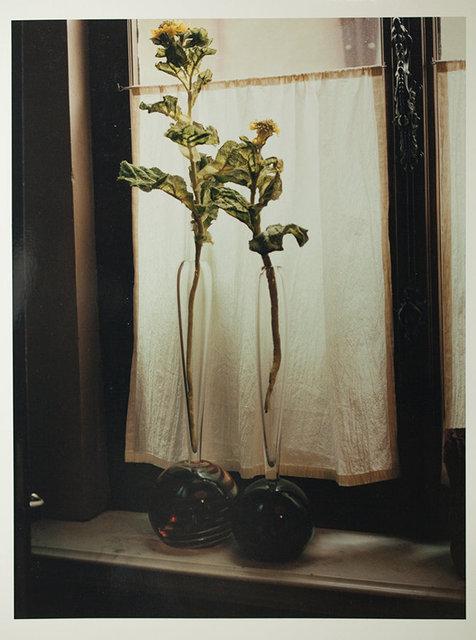 #15 Flower/Daniel Ost