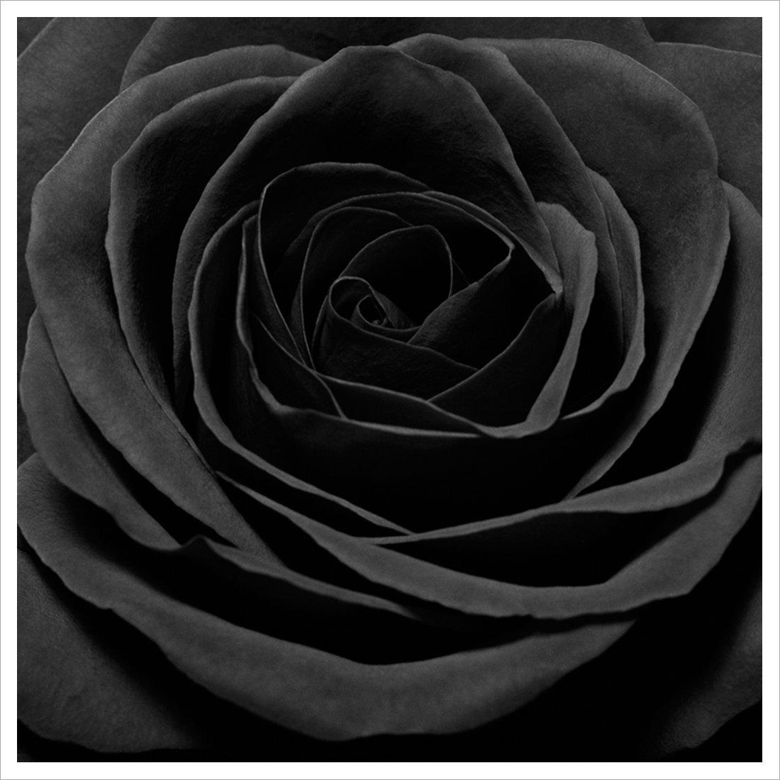007_Rose_11X11_1_lr.jpg