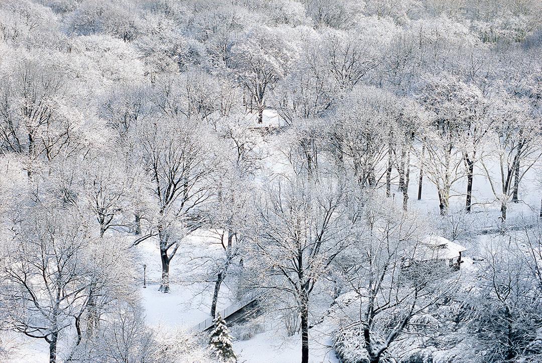 iceladen trees