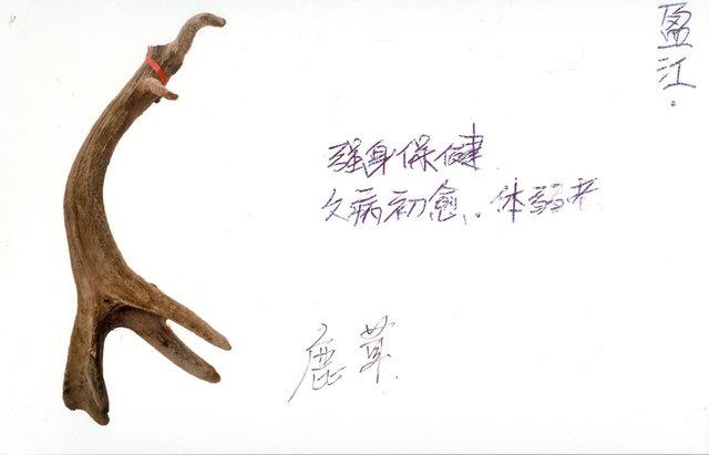 鹿茸 (lurong)