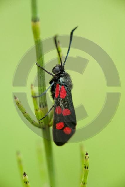 Tiere-Insekten-8.jpg