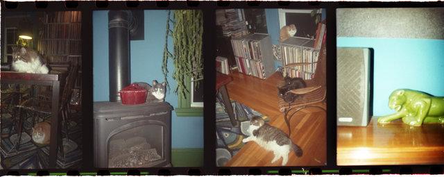 12catsFLATSHARP.jpg
