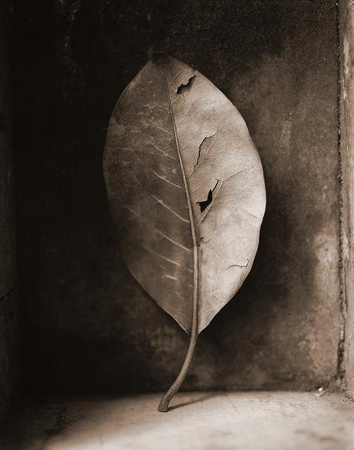 magnolia_leaf.jpg