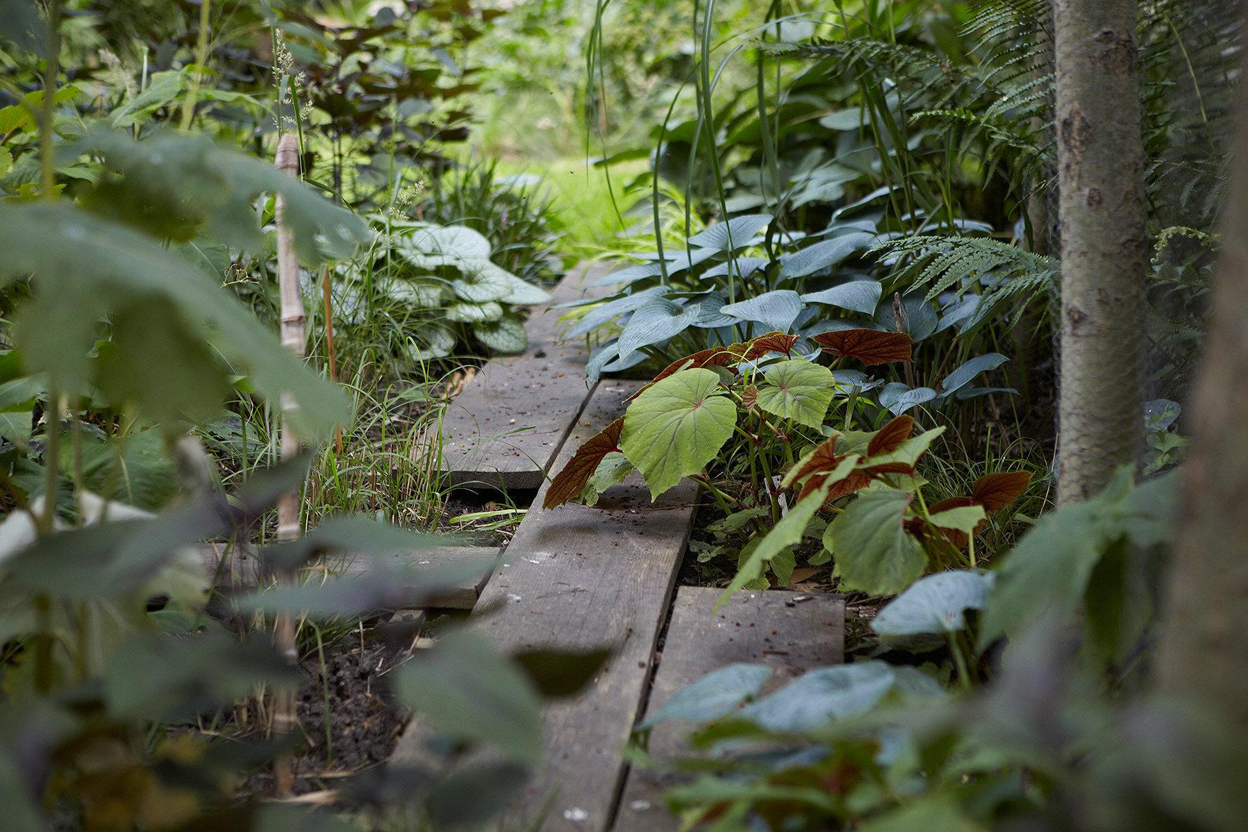 jardin d u0026 39 ombre  lille