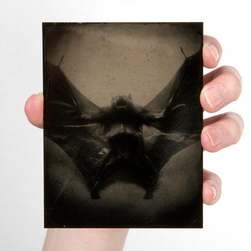 Wings #4