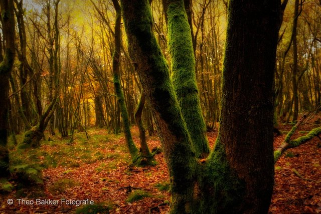 2010-346_007-Edit.jpg