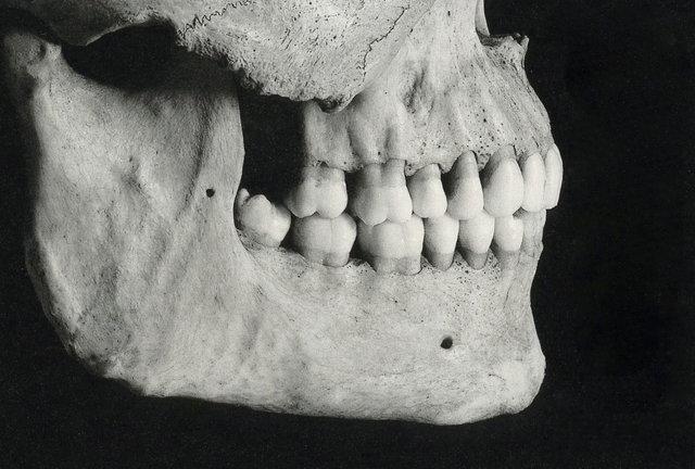cranium007_2.jpg