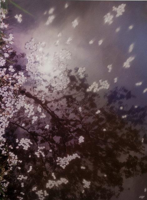 #8 Sakura Shizukuish/雫石