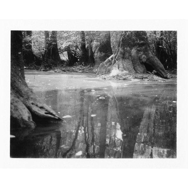 swamp-cypress.jpg