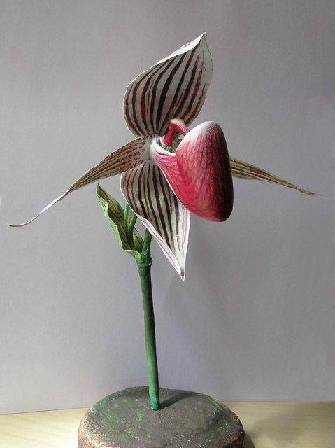 orchid_004__2_.jpg