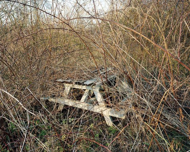 14090-(picnic-table)-(viewbook).jpg