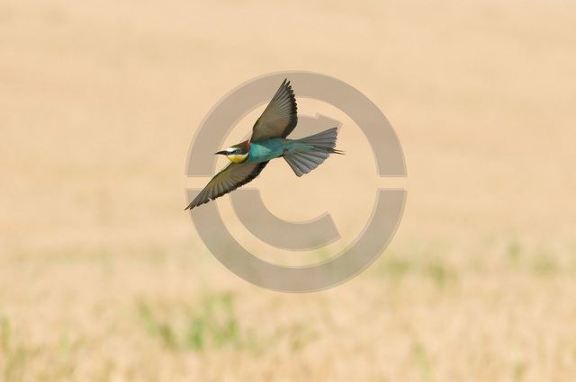 Tiere-Vögel-38.jpg