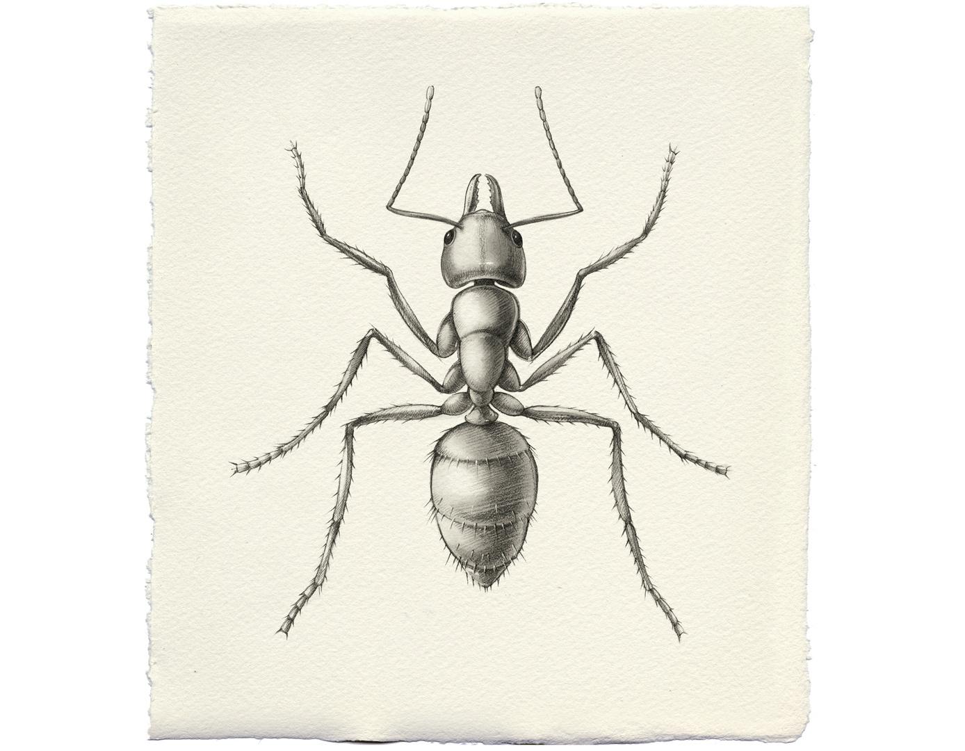 vwbk2012_Biodiversity_Formicidae@200.jpg