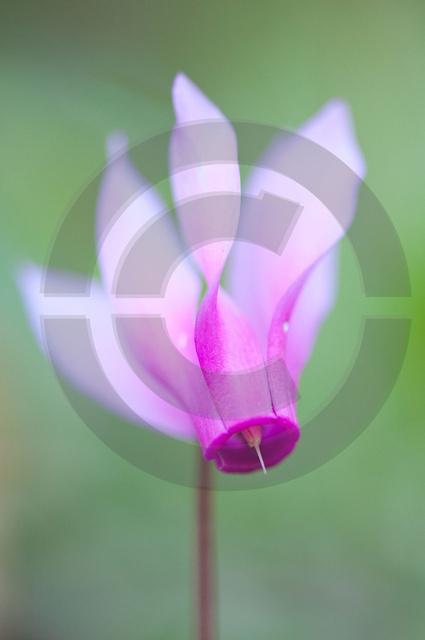 Pflanzen_Copyright_468.jpg