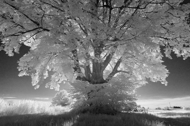 Landschaften_Copyright_373.jpg